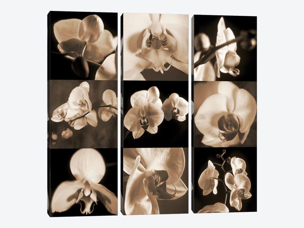 Orchid Bouquet by Caroline Kelly 3-piece Canvas Art Print