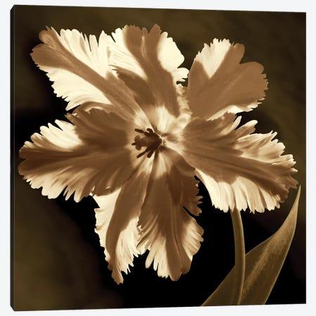 Parrot Tulip I Canvas Print #KEL40} by Caroline Kelly Canvas Artwork