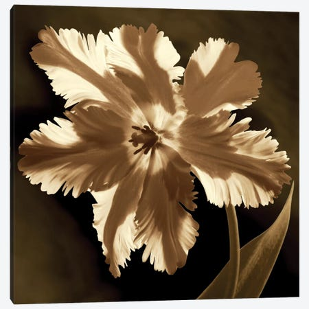 Parrot Tulip I Canvas Print #KEL40} by Caroline Kelly Canvas Artwork