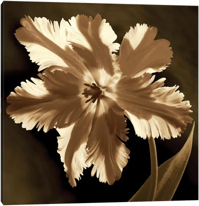 Parrot Tulip I Canvas Art Print