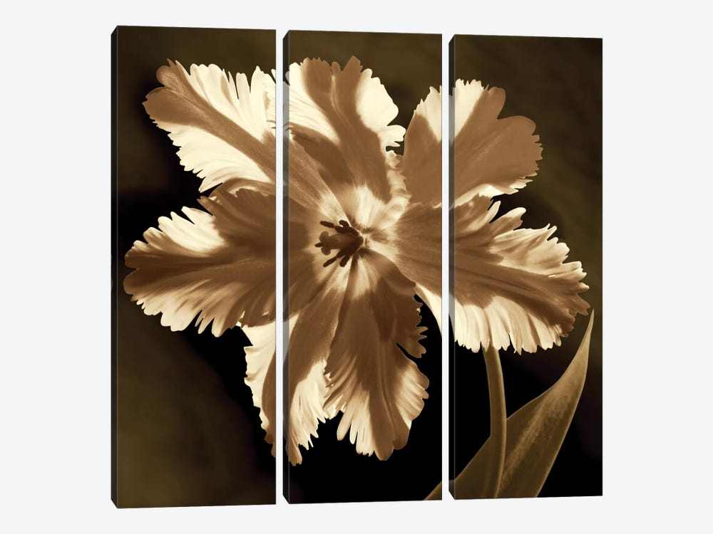 Parrot Tulip I by Caroline Kelly 3-piece Canvas Artwork