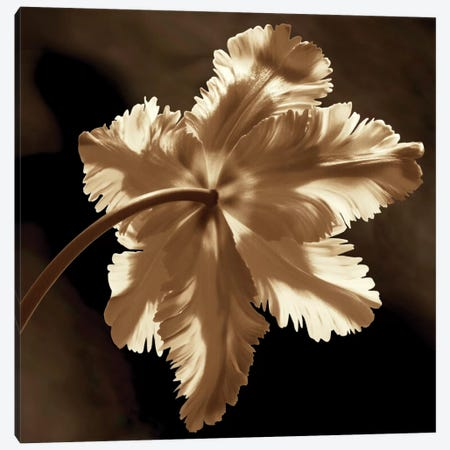 Parrot Tulip II Canvas Print #KEL41} by Caroline Kelly Canvas Art