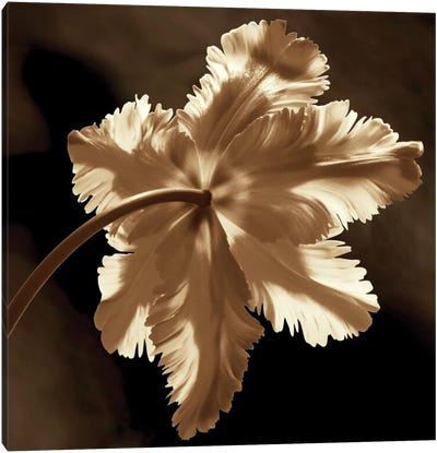 Parrot Tulip II Canvas Art Print