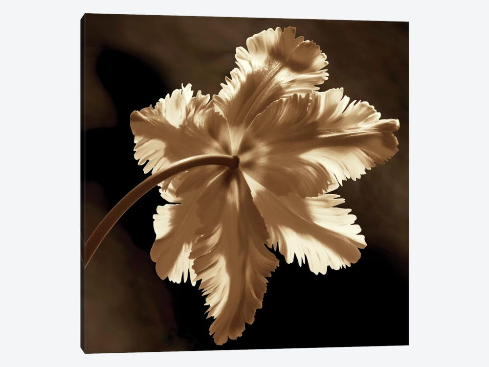 Parrot Tulip II by Caroline Kelly 1-piece Canvas Print