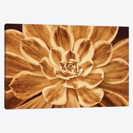 Sedona Canvas Print #KEL45} by Caroline Kelly Canvas Print