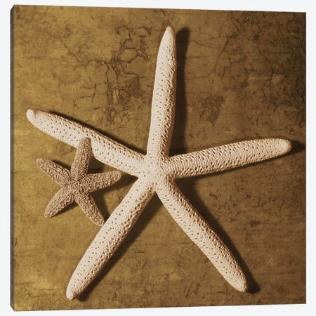 Starfish Canvas Print #KEL47} by Caroline Kelly Art Print
