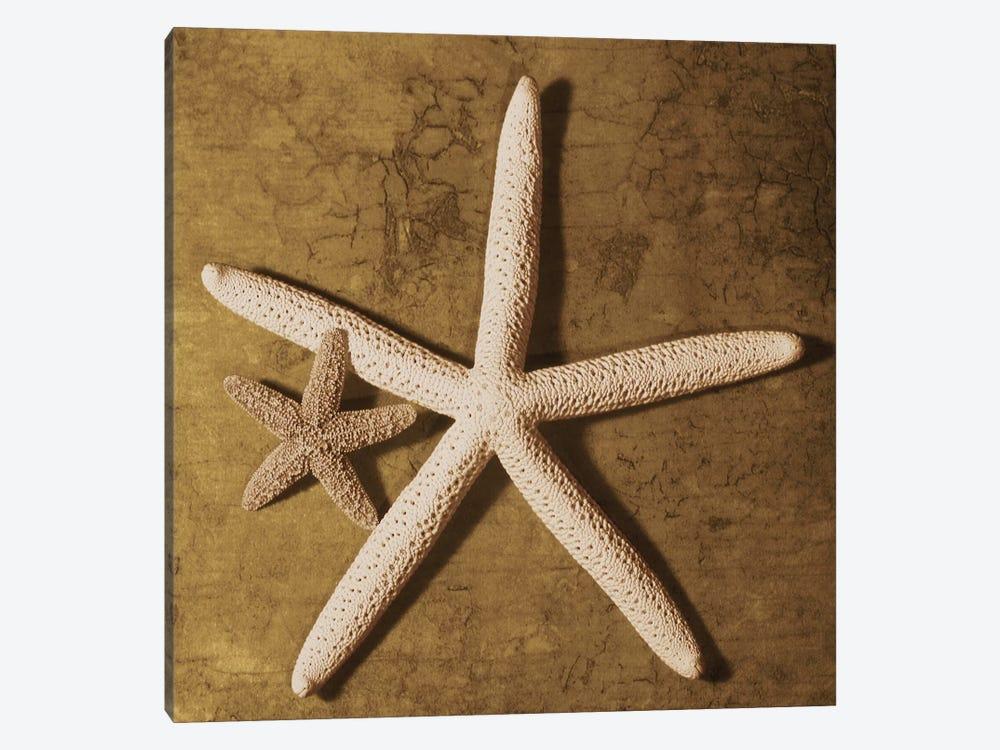 Starfish by Caroline Kelly 1-piece Art Print