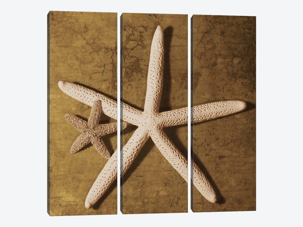 Starfish by Caroline Kelly 3-piece Canvas Print