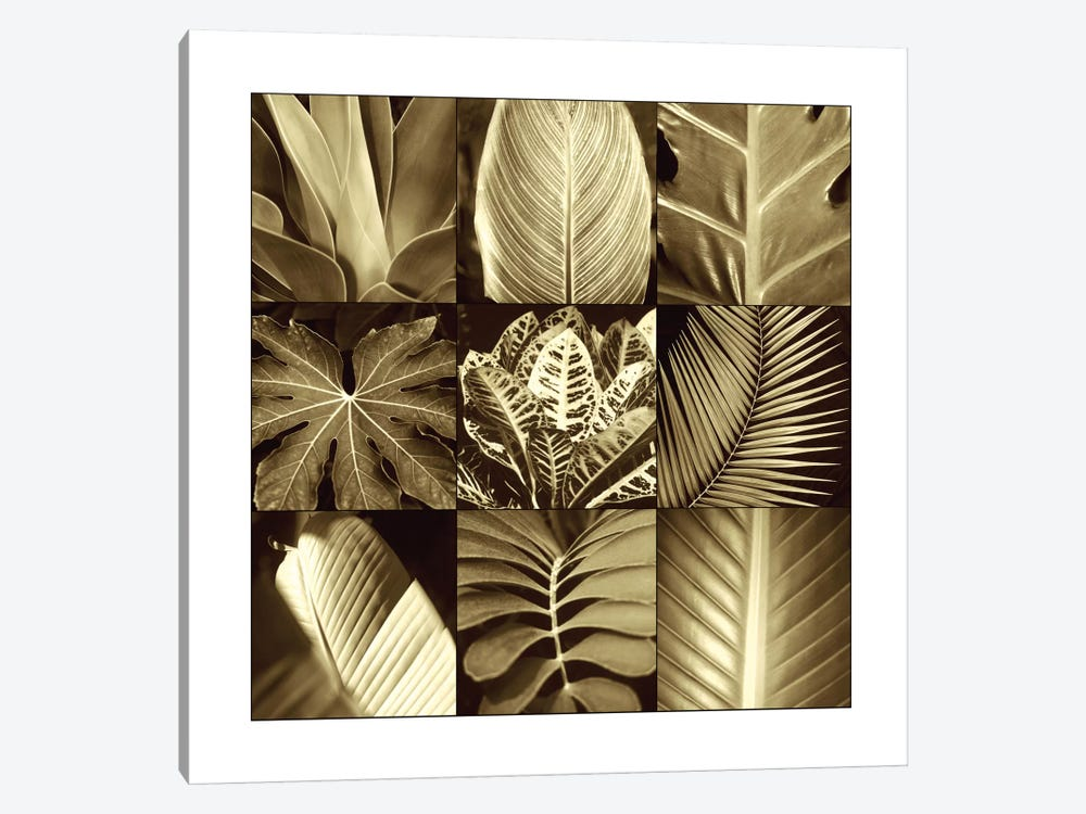 Tropical Leaves II by Caroline Kelly 1-piece Canvas Print