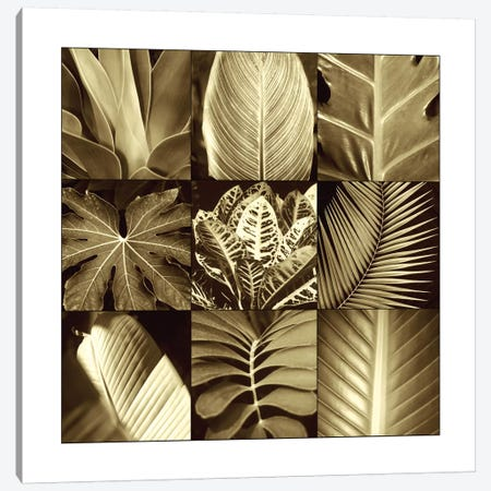 Tropical Leaves II Canvas Print #KEL49} by Caroline Kelly Canvas Wall Art