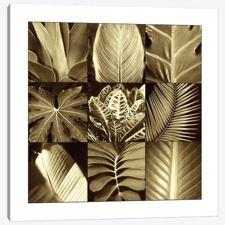 Tropical Leaves II Canvas Print #KEL49} by Caroline Kelly Canvas Wall Art