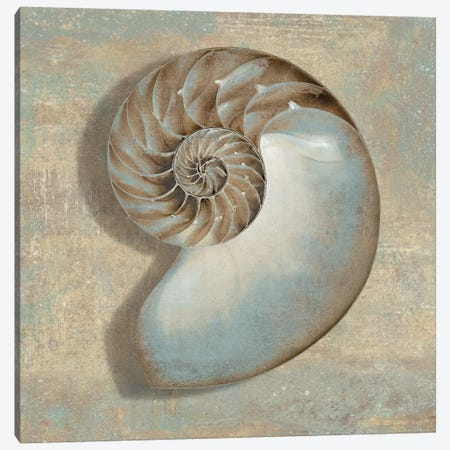 Aqua Nautilus Canvas Print #KEL4} by Caroline Kelly Canvas Artwork