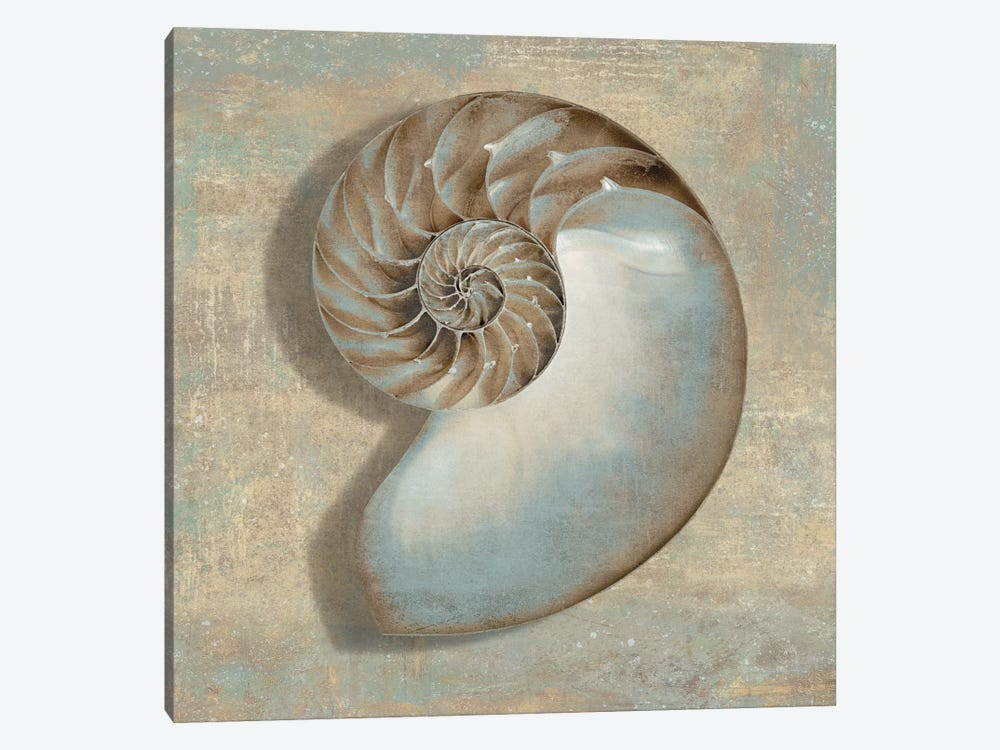 Aqua Nautilus by Caroline Kelly 1-piece Canvas Art