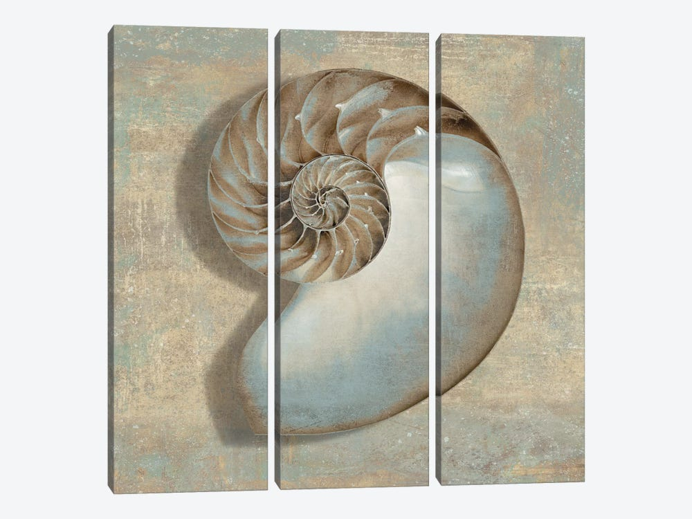 Aqua Nautilus by Caroline Kelly 3-piece Canvas Wall Art