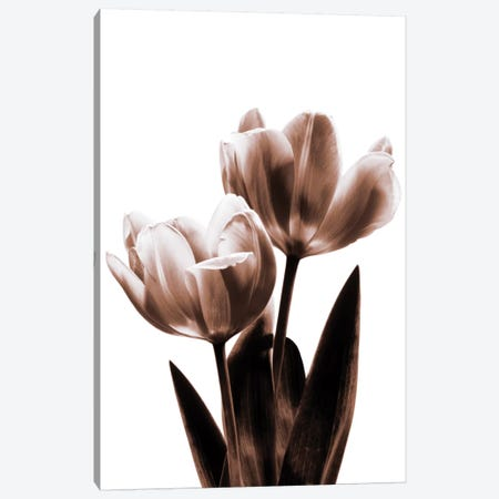 Tulip In Sepia II Canvas Print #KEL51} by Caroline Kelly Canvas Print
