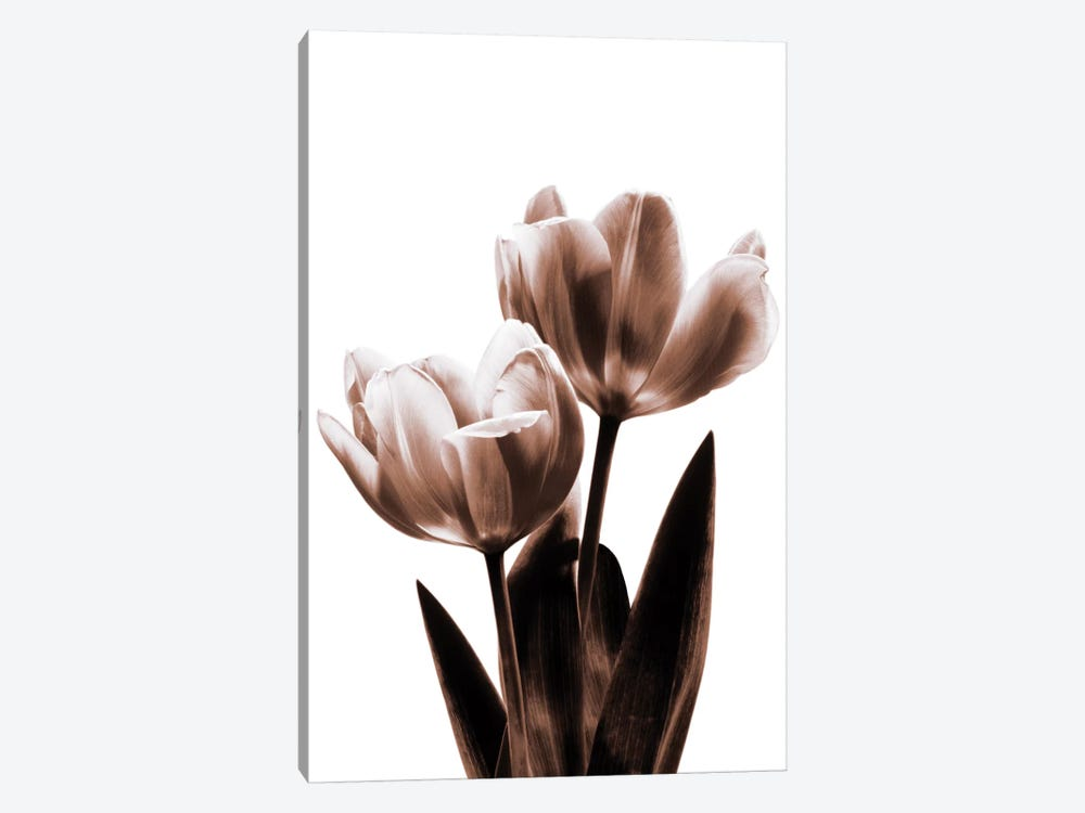 Tulip In Sepia II by Caroline Kelly 1-piece Canvas Artwork