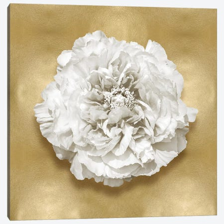 Flower On Gold II Canvas Print #KEL55} by Caroline Kelly Canvas Artwork