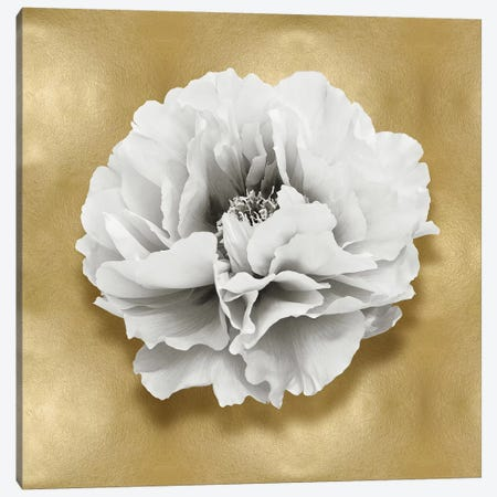 Flower On Gold III Canvas Print #KEL56} by Caroline Kelly Canvas Artwork