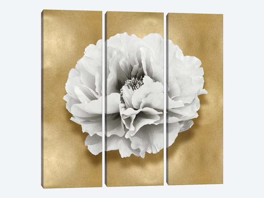 Flower On Gold III by Caroline Kelly 3-piece Art Print