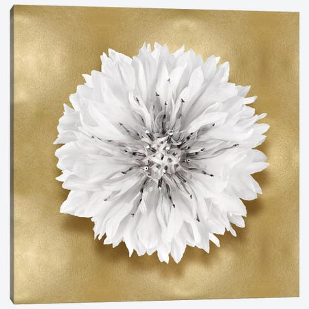Flower On Gold IV Canvas Print #KEL57} by Caroline Kelly Canvas Artwork