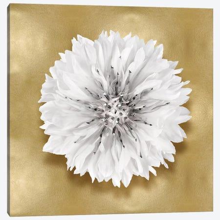 Flower On Gold IV Canvas Print #KEL57} by Caroline Kelly Canvas Artwork