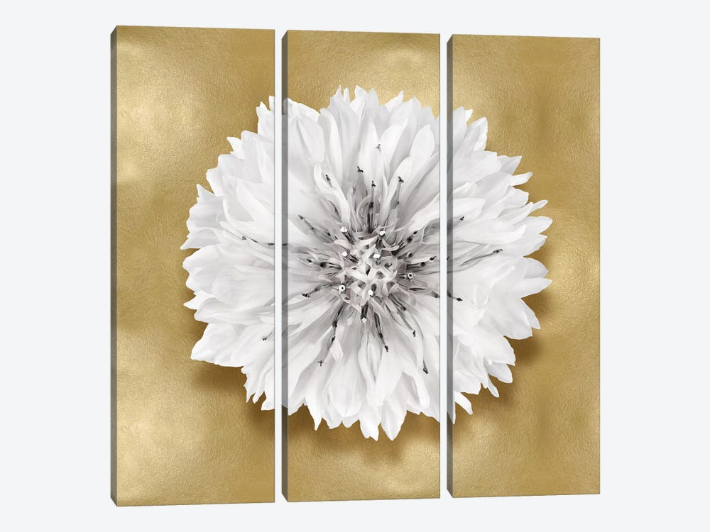 Flower On Gold IV by Caroline Kelly 3-piece Canvas Wall Art