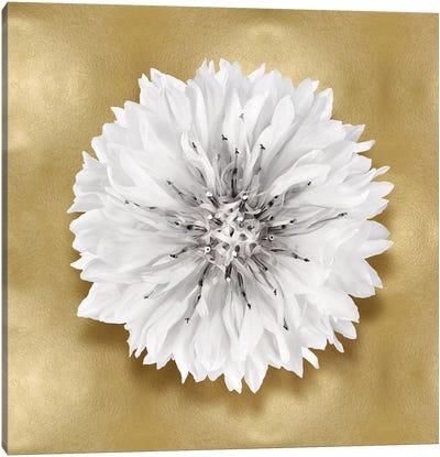 Flower On Gold IV Canvas Art Print