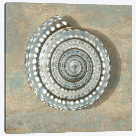 Aqua Seashell Canvas Print #KEL5} by Caroline Kelly Canvas Artwork