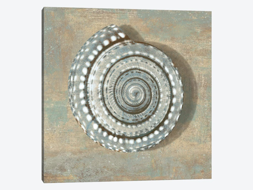 Aqua Seashell by Caroline Kelly 1-piece Canvas Print