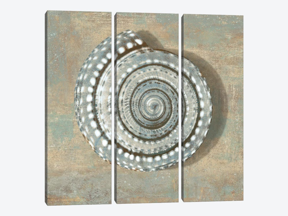 Aqua Seashell by Caroline Kelly 3-piece Canvas Art Print