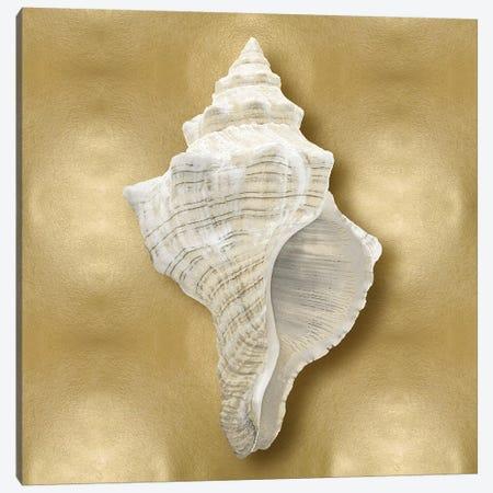 Shell On Gold I Canvas Print #KEL60} by Caroline Kelly Canvas Artwork