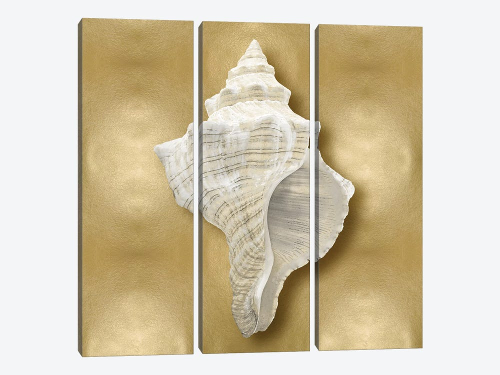Shell On Gold I 3-piece Canvas Art