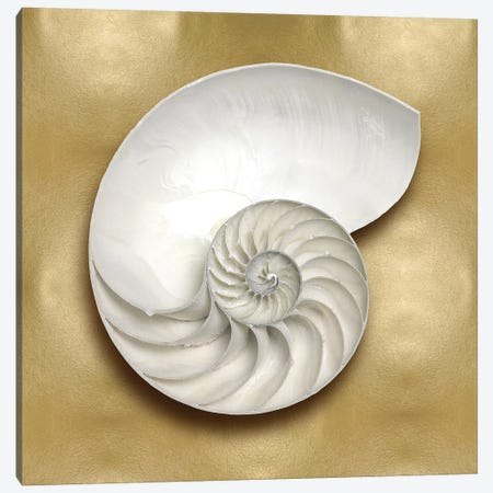 Shell On Gold II Canvas Print #KEL61} by Caroline Kelly Canvas Art