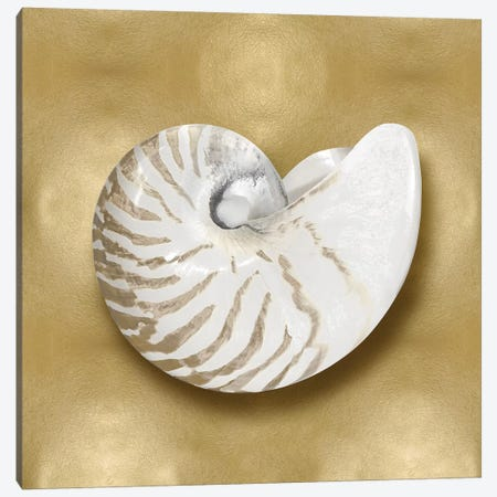 Shell On Gold III Canvas Print #KEL62} by Caroline Kelly Canvas Art