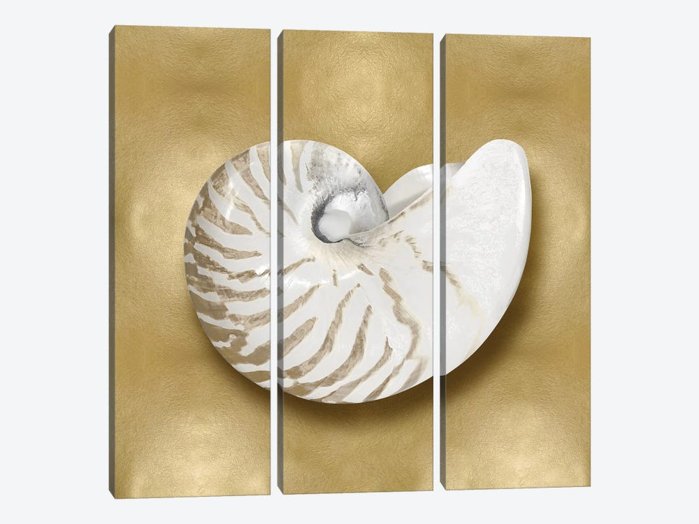 Shell On Gold III by Caroline Kelly 3-piece Canvas Artwork