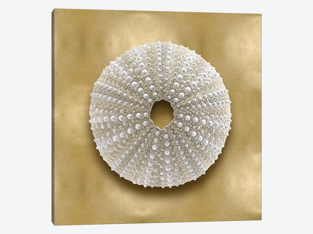 Shell On Gold V by Caroline Kelly 1-piece Canvas Artwork