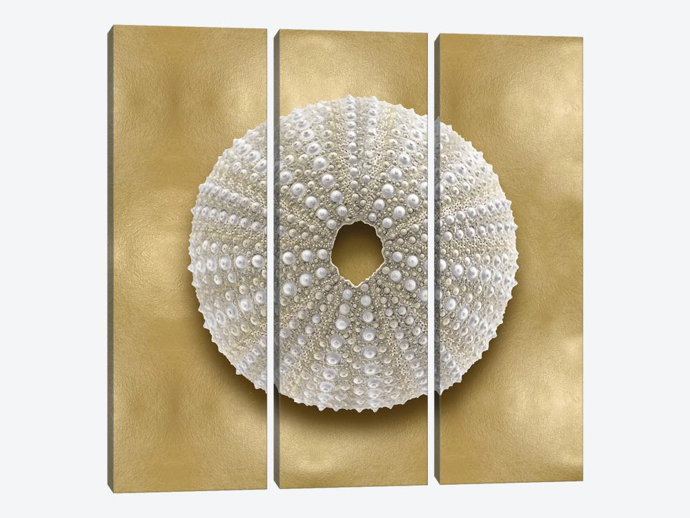 Shell On Gold V by Caroline Kelly 3-piece Canvas Artwork