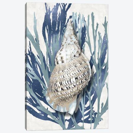 Shell Coral Aqua Blue I Canvas Print #KEL66} by Caroline Kelly Canvas Art Print