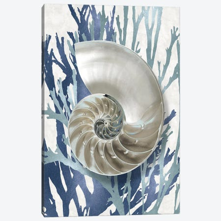 Shell Coral Aqua Blue II Canvas Print #KEL67} by Caroline Kelly Canvas Print