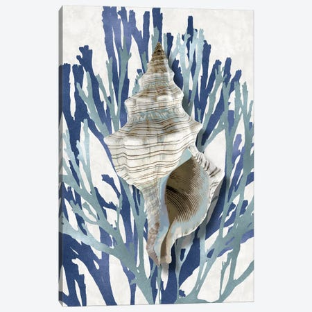Shell Coral Aqua Blue III Canvas Print #KEL68} by Caroline Kelly Canvas Wall Art