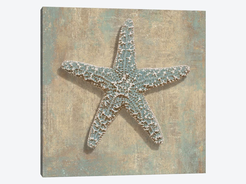 Aqua Starfish by Caroline Kelly 1-piece Canvas Art