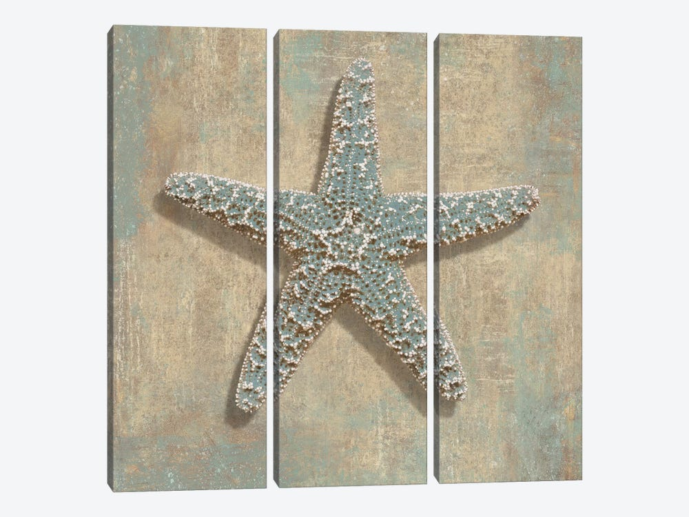 Aqua Starfish by Caroline Kelly 3-piece Canvas Art