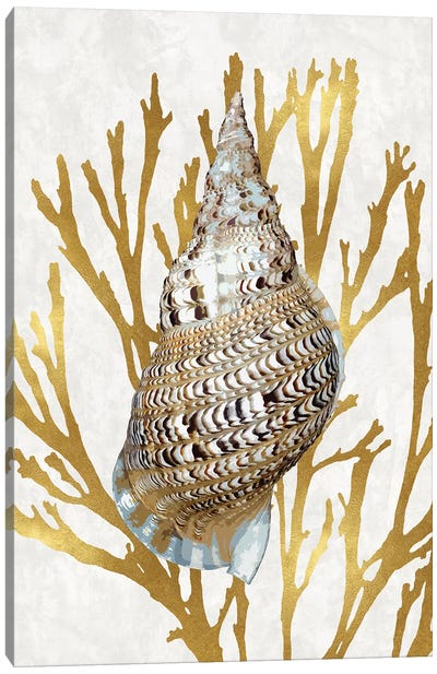 Shell Coral Gold I Canvas Art Print