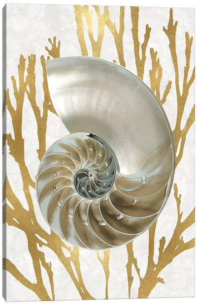 Shell Coral Gold II Canvas Art Print