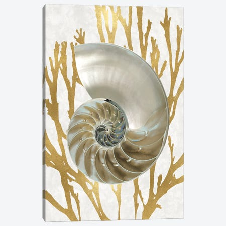 Shell Coral Gold II Canvas Print #KEL71} by Caroline Kelly Canvas Print