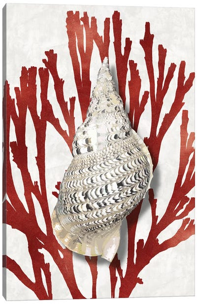 Shell Coral Red I Canvas Art Print