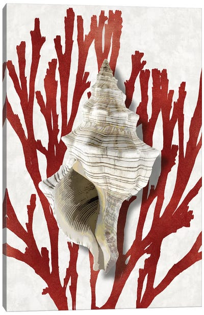 Shell Coral Red III Canvas Art Print