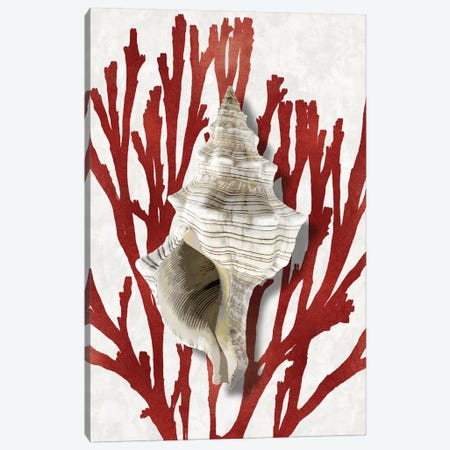 Shell Coral Red III Canvas Print #KEL76} by Caroline Kelly Canvas Wall Art