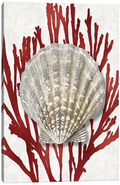 Shell Coral Red IV Canvas Art Print