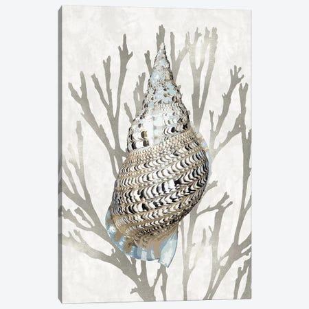 Shell Coral Silver I Canvas Print #KEL78} by Caroline Kelly Canvas Art Print